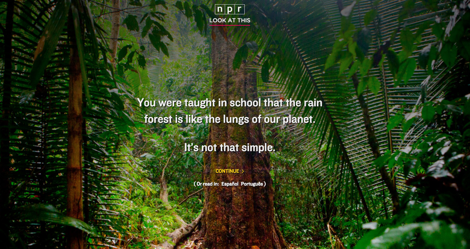 Rainforest Essays (Examples)
