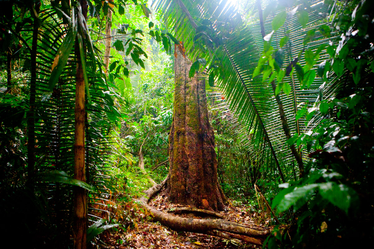 Look At This: Rain Forest Was Here - NPR